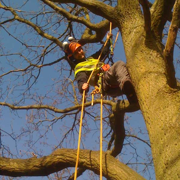 Tree cutting Isleworth Tree Maintenance