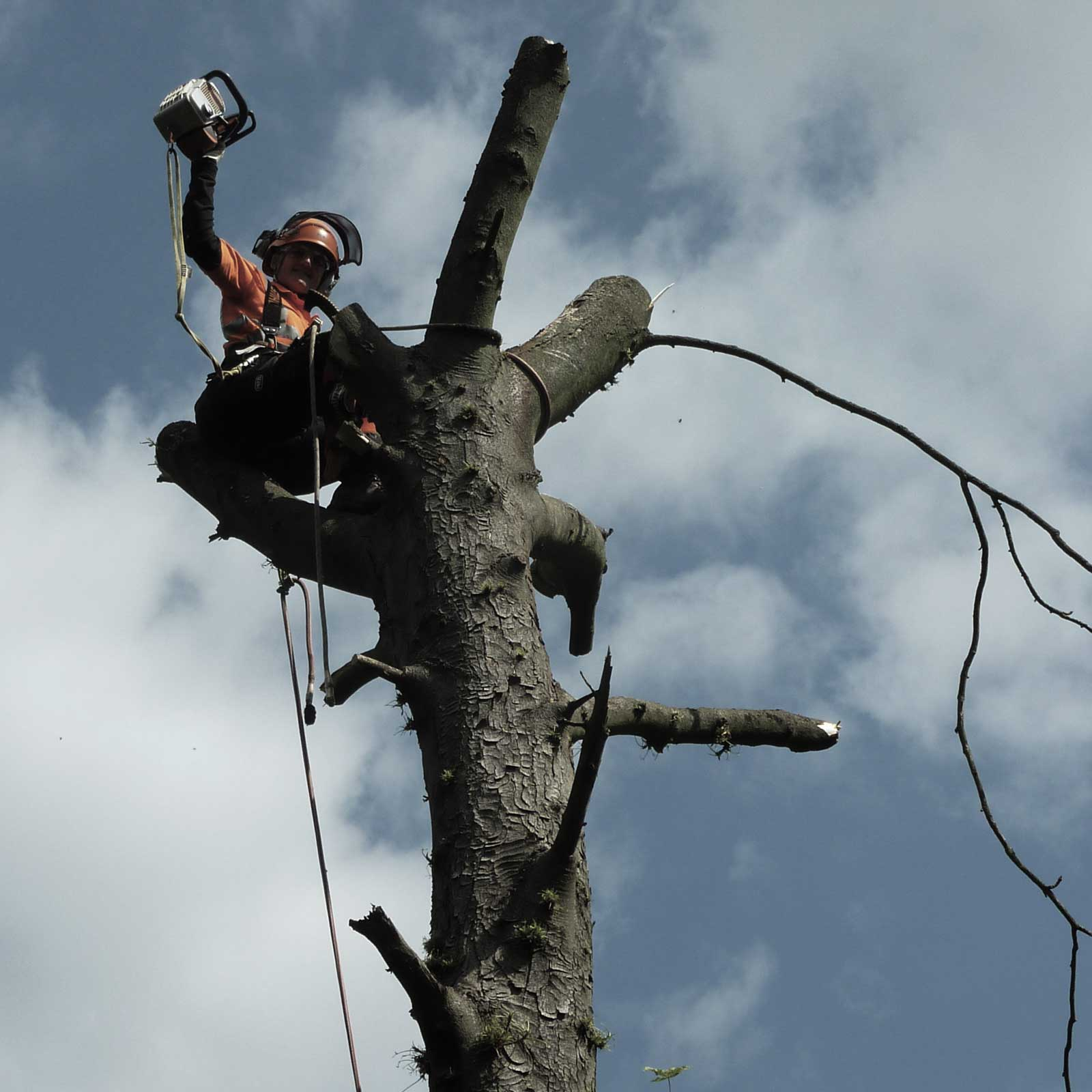 Sykes Tree Care in West London