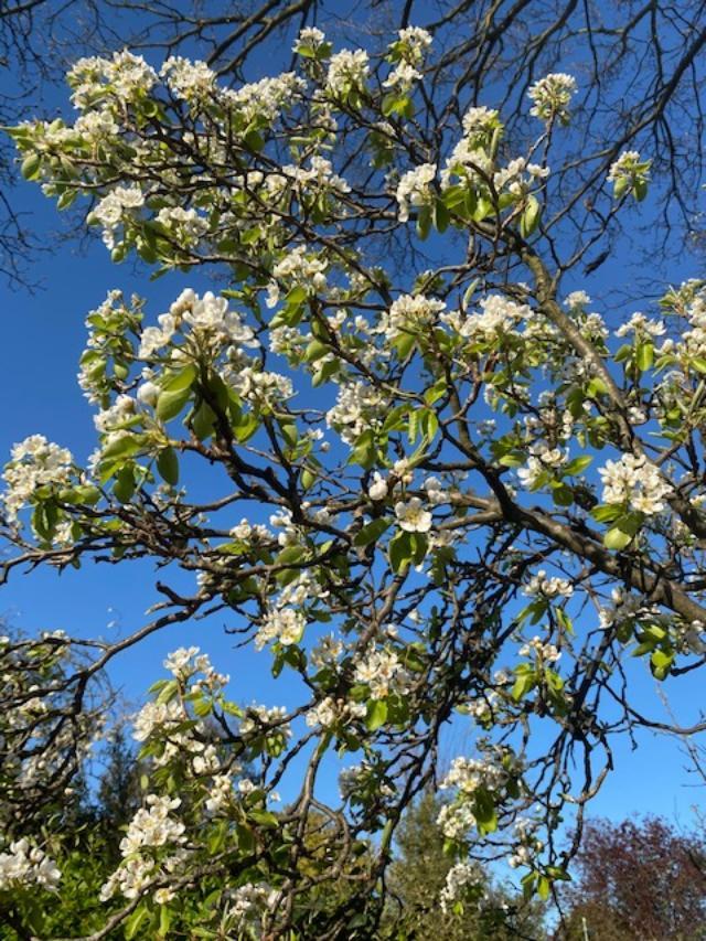 Client Blossom